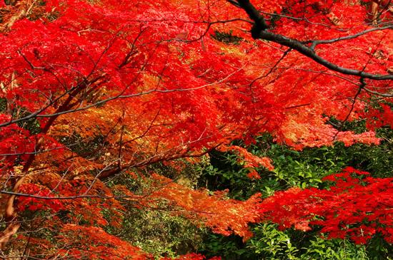 秋と言えば紅葉